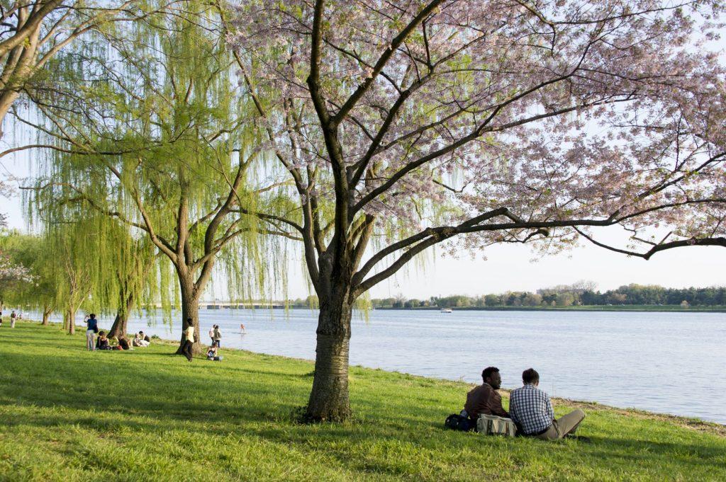 Panduan Lengkap Taman Tepi Laut Georgetown Di Washington DC