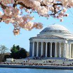 Menikmati Keindahan United States National Arboretum Di Washington DC