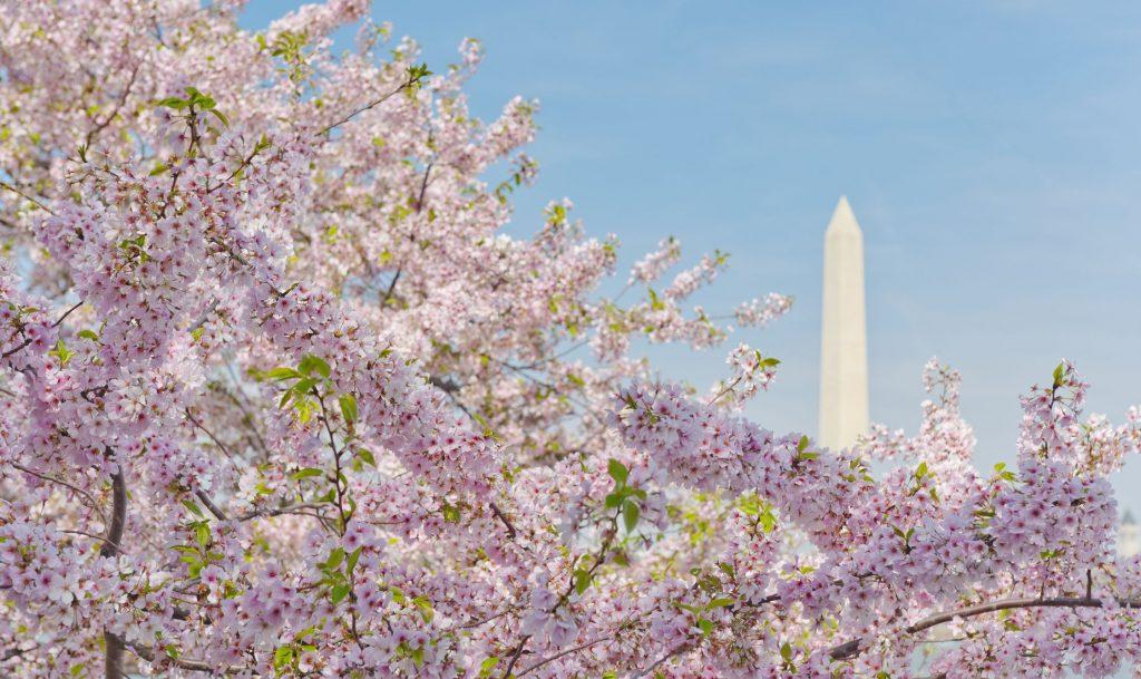 Tips Perencanaan Perjalanan Washington DC